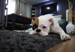 sick-dog